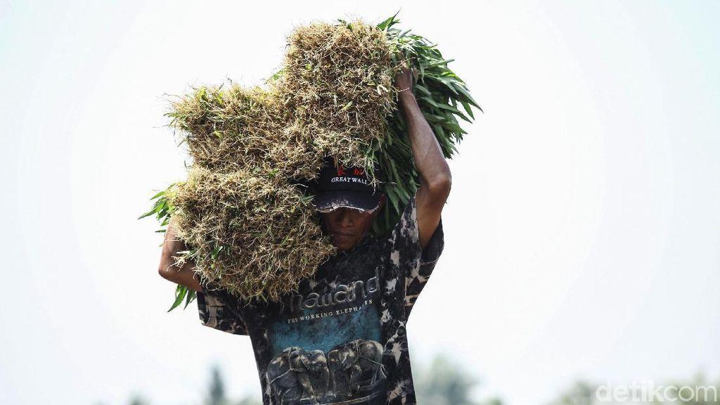 Nasib Petani di Tengah Reforma Agraria Jokowi