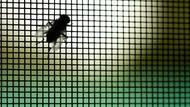 Dirumahkan karena Pandemi, Pemuda di Pinrang Jadi Peternak Lalat