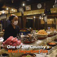 Penggemar Seafood, Di Sini Ada AYCE Sashimi Harga Ekonomis!