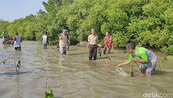Cirebon Kembangkan Ekowisata Mangrove