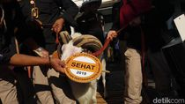 Wali Kota Bandung Minta Pedagang Hewan Kurban Tak Jualan di Trotoar