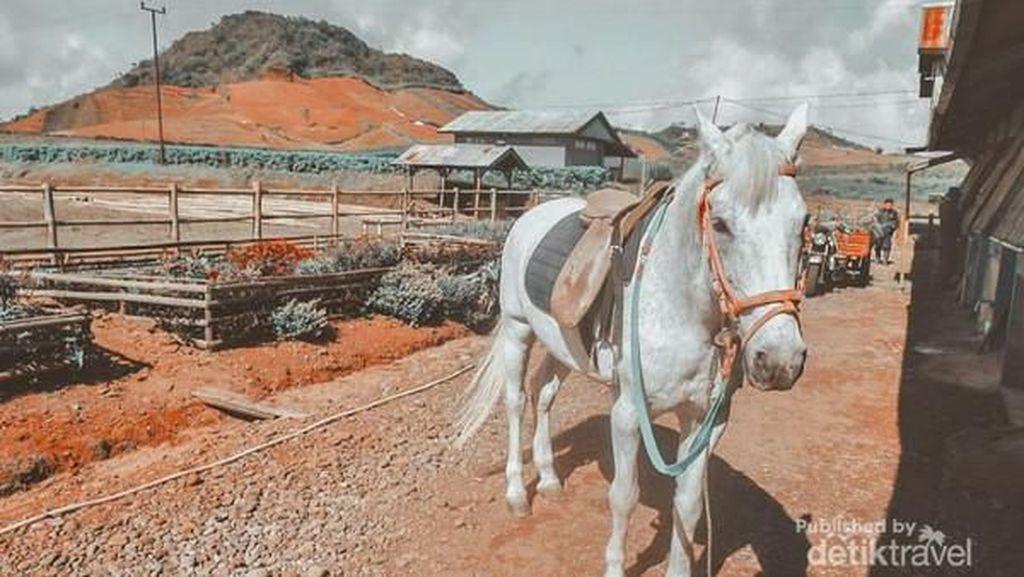 Berkuda di Dataran Tinggi Dekat Makassar, Bisa!
