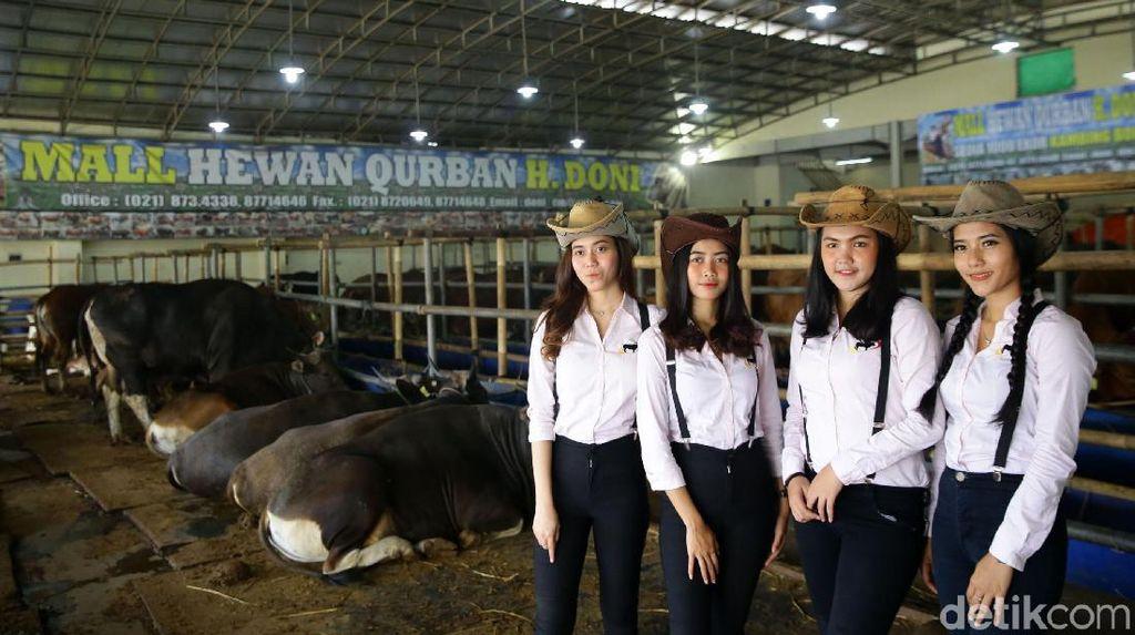 Berburu Hewan Kurban Bersama Para Cowgirl Cantik di Depok