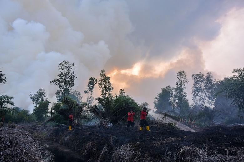 Bupati Pelalawan Penuhi Panggilan Polisi Terkait Kasus Karhutla di Riau