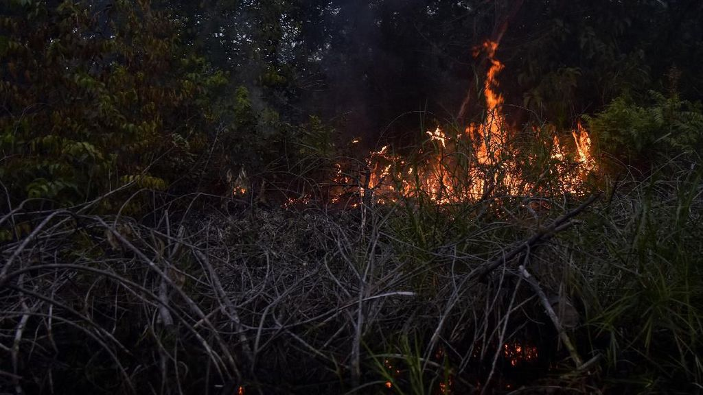 Karhutla di Bengkalis Riau Sepekan Belum Padam, Satgas Kekurangan Air