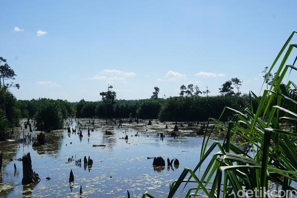 Di saat tertentu, memang kadang sungai memiliki air yang cukup tinggi. Namun kadang juga surut seperti ini (Shinta Angriyana/detikcom)