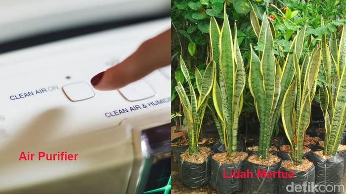 Pilih lidah mertua atau air purifier? (Foto: detikhealth)
