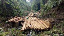 Terlibat Illegal Logging di Sulut, Oknum Polisi Hutan Jadi DPO