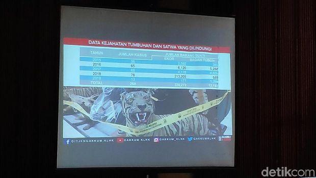 Data mencatat perburuan satwa liar terus meningkat tiap tahun