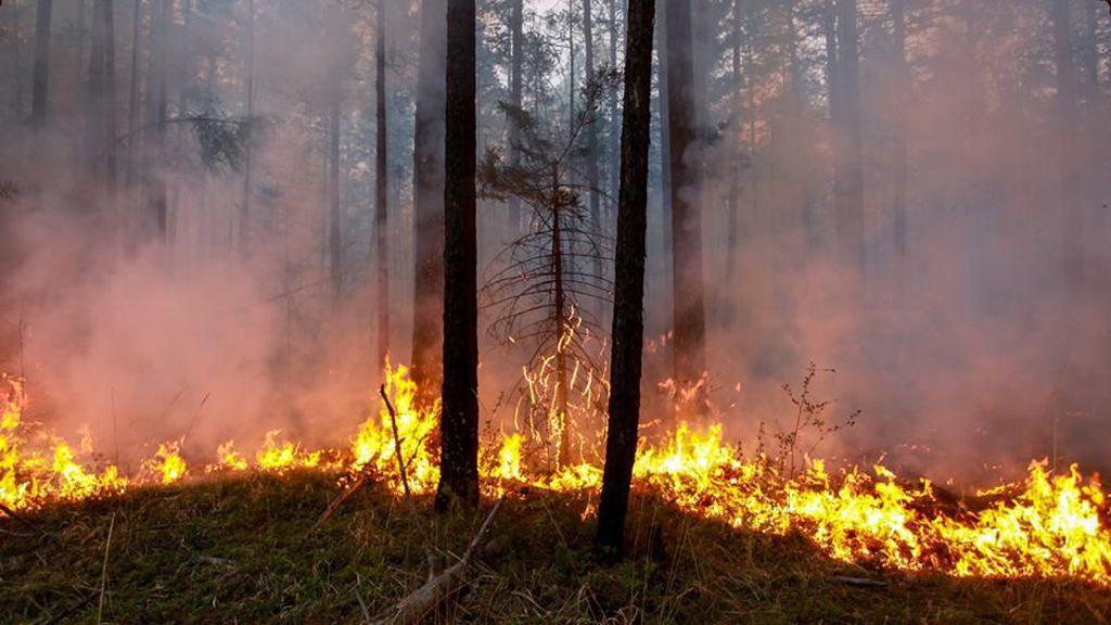 Kebakaran Kutub Utara, Apa Penyebab Kobaran Api Landa Hutan Bersalju?