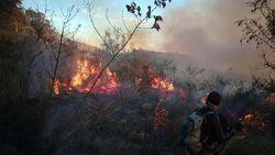 Satu Pekan, 23 Kebakaran Hutan Terjadi di Jawa Timur