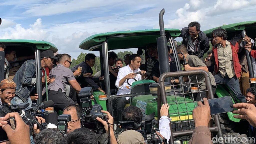 Tinjau Kebun Organik di Toba, Jokowi Makan Jeruk dan Naik Traktor