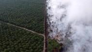 KPK Soroti Kerusakan Hutan, Negara Rugi Rp 35 Triliun Per Tahun