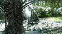 Semburan Gas Bercampur Air Muncul di Aceh Timur, ini Penjelasan ESDM