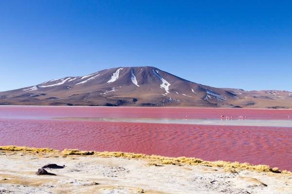 Genangan darah ini menjadi semakin eksotis dengan pemandangan pegunungan andes. Di saat perkembangan algae menurun, danau garam ini berubah menjadi pink. (iStock)
