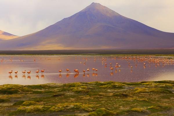 Berada di ketinggian, Laguna Colorada bukanlah danau biasa. Laguna Colorada adalah danau yang mengandung mineral garam dengan cukup tinggi. Karena tingginya kandungan garam, Laguna ini pun menghasilkan boraks dalam perairan. (iStock)