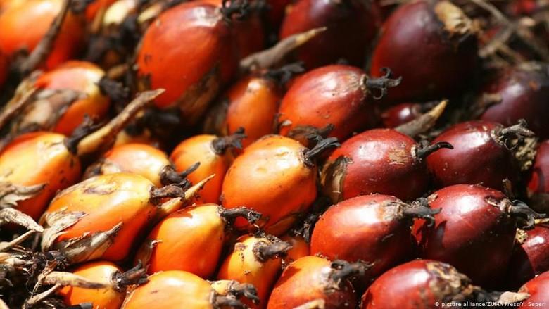 Pasar Ekspor Minyak Sawit Terbesar Indonesia di India Direbut Malaysia