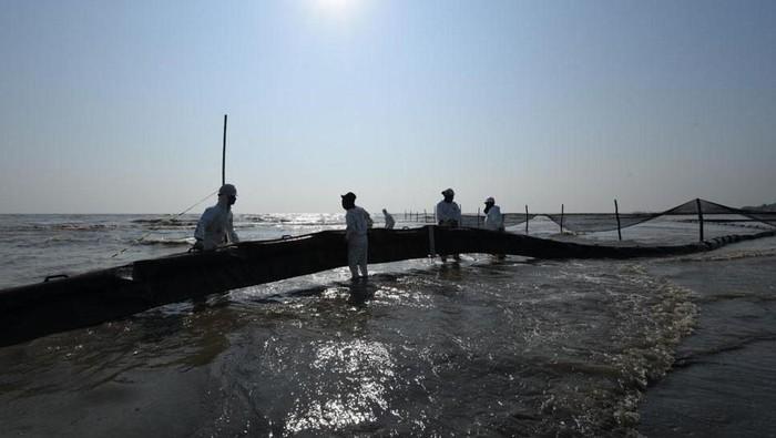 Ragam upaya dilakukan untuk bersihkan tumpahan minyak di laut. Salah satunya memasang Oil Boom SL 25 untuk meminimalisir minyak yang terbawa arus tiba di pantai