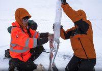 British Antarctic Survey meneliti es di Pulau Bouvet (British Antarctic Survey)