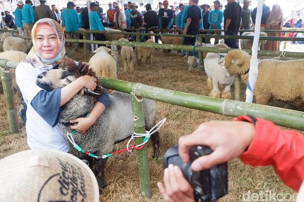 Domba yang memiliki harga tinggi yakni yang memiliki mulut rapi, kuping lancip dan besar. Selain itu, juga dari kening hingga hidung tidak terdapat bulu. (Uje Hartono/detikcom)