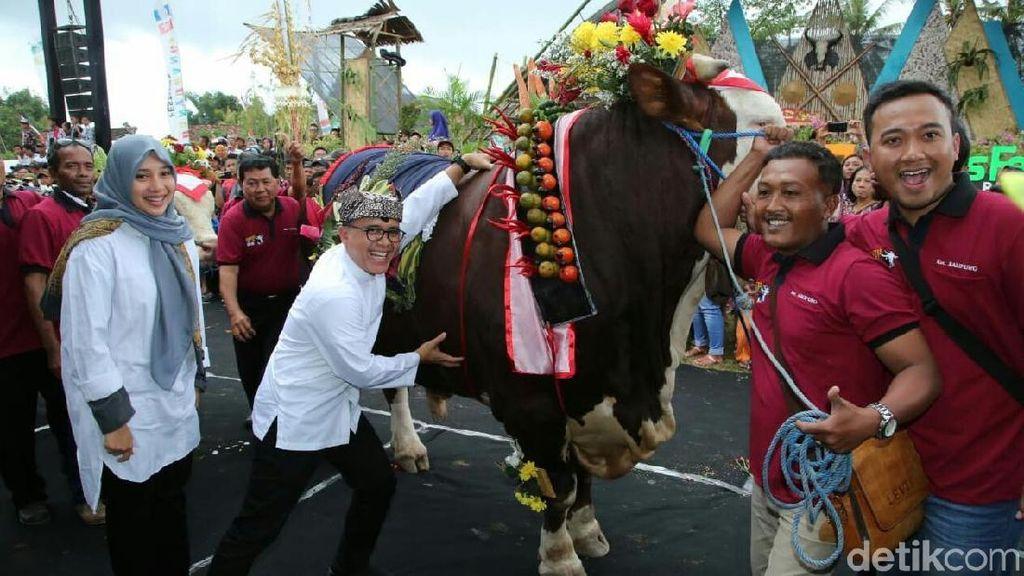 Banyuwangi Gelar Cattle and Pets Festival Jelang Idul Adha