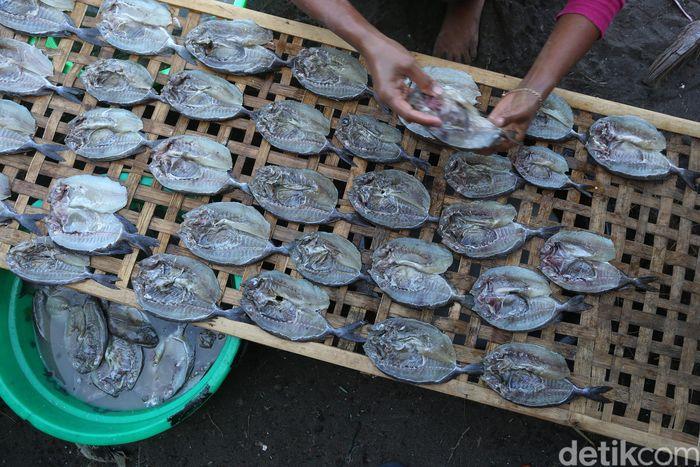 Ikan tersebut merupakan hasil tangkapan para nelayan. Keuntungan dari penjualan ian Kerapu tersebut mereka gunakan untuk membiayai pendidikan anak-anaknya dan membeli peralatan rumah tangga.