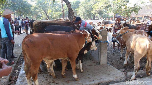 Pasar hewan Ambarketawang, Sleman