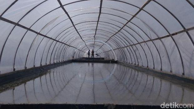 Penuhi Garam Industri, Petambak Didorong Pakai Metode Prisma