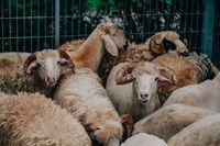 Sate hingga Sop, Olahan Spesial Serba Daging Meriahkan Idul Adha