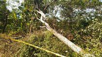 Ini Dia Pohon yang Diduga Sebabkan Blackout 3 Provinsi di Jawa