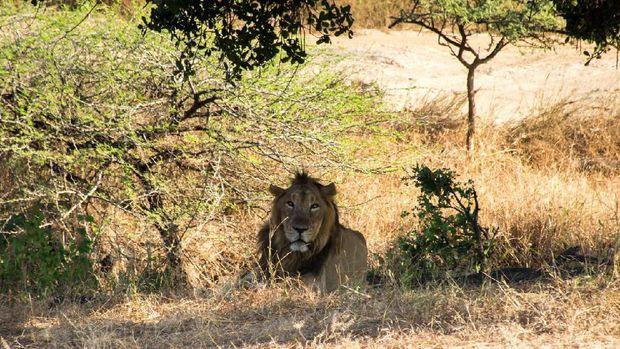 6 Tips Aman Bertualang di Taman Nasional