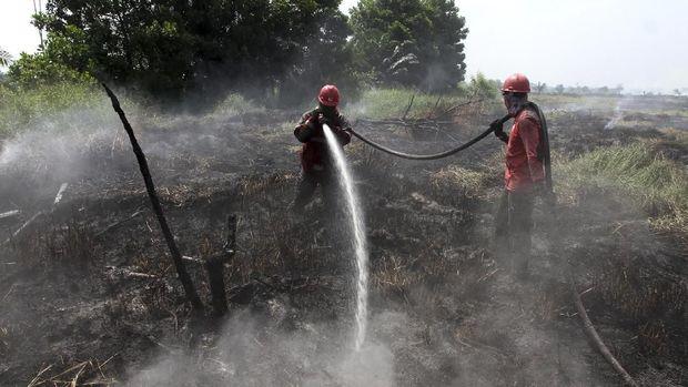 Wiranto Sebut 3 Kendala Soal Karhutla: Dari Hujan Hingga Dana