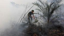 Ada Beda Data Luas Karhutla di Riau, BPBD Beri Penjelasan
