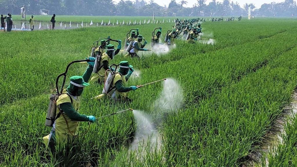 Ekspor Meningkat, Pengusaha Nilai Pemerintah Sukses Benahi Pertanian
