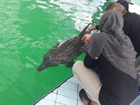 Evakuasi lumba-lumba dari salah satu hotel di Bali