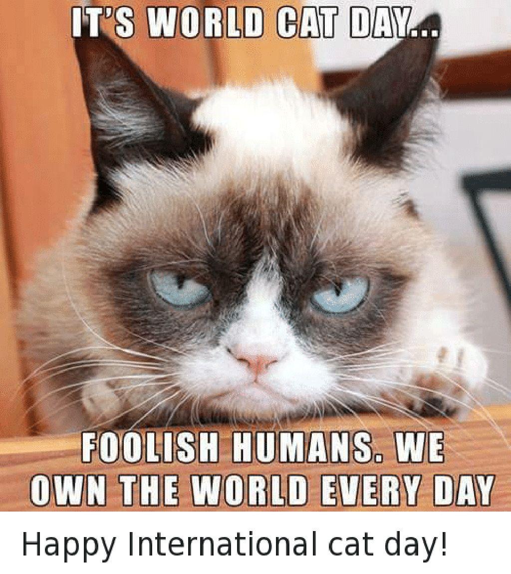 Hari kucing sedunia jatuh pada tanggal 8 Agustus, padahal bagi para kucing mereka sudah menguasai dunia dari dulu, setiap hari. (Foto: me.me)