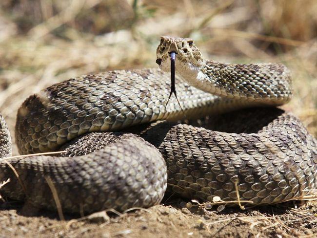 ♞ Anyar Mimpi digigit ular belang togel