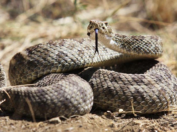Mimpi ular derik togel