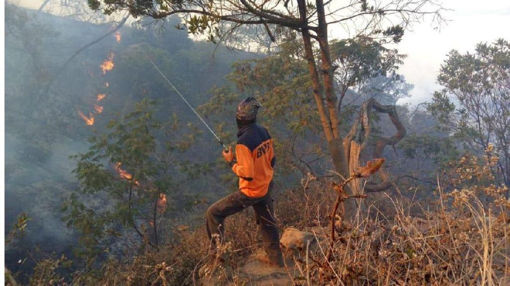 Kebakaran Gunung Ciremai, Petugas Berusaha Padamkan Satu Titik Api Terakhir