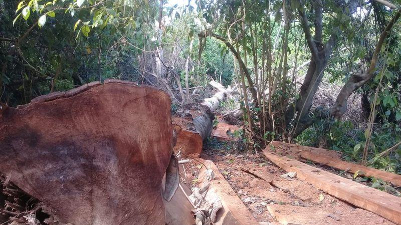 Baru-baru ini, Tim gabungan TNI-Polri dan pemerintah menemukan 100 kubik kayu ilegal hasil pembalakan liar di Gunung Tambora. Di balik temuan ini, ada kisah ekspedisi Air Terjun Rempa Peo yang dilakukan pemuda setempat. (dok. Istimewa)