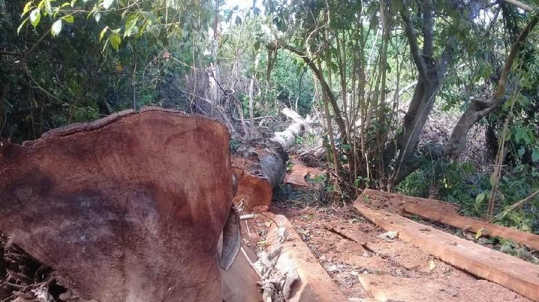 Temuan 100 kubik kayu ilegal di Taman Nasional Gunung Tambora (dok. Istimewa)