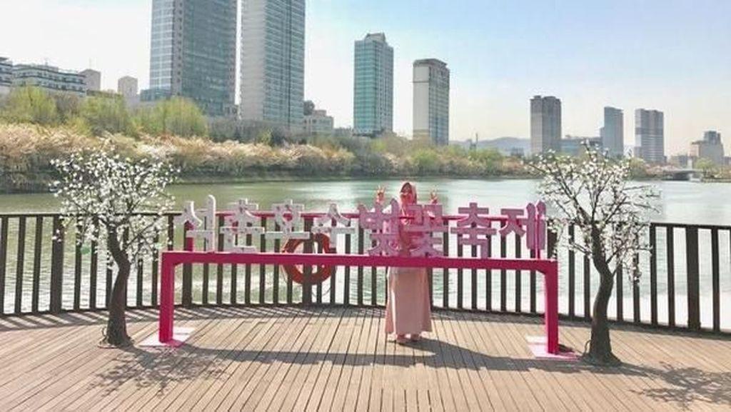 Bukan di Jepang, Ini Sakura di Korea Selatan