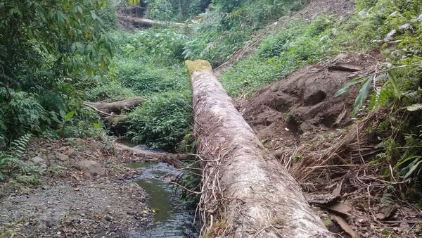 Sekelompok pemuda lokal ingin mencari Air Terjun Rempa Peo yang amat eksotis di tengah hutan, sekaligus eksplorasi jalur baru untuk pendakian Gunung Tambora. Namun di tengah jalan, pohon-pohon tumbang jadi pemandangan yang terlihat. (dok. Istimewa)