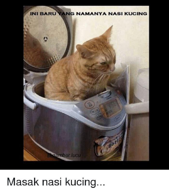 Gambar Kucing Nyebelin godean.web.id
