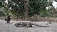 Kala Obsesi Proyek Jurassic Park Komodo Dihentikan UNESCO