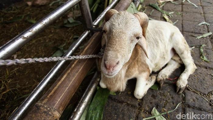 Gubernur DKI Jakarta Anies Baswedan mengeluarkan peraturan untuk pelaksanaan kurban. Salah satunya soal larangan menjual hewan kurban di trotoar.