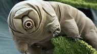 Ini Tardigrade, Beruang Air yang Terdampar di Bulan dan Tetap Hidup