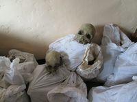 Tulang belulang tentara Jepang (Istimewa/Balai Arkeologi Papua)