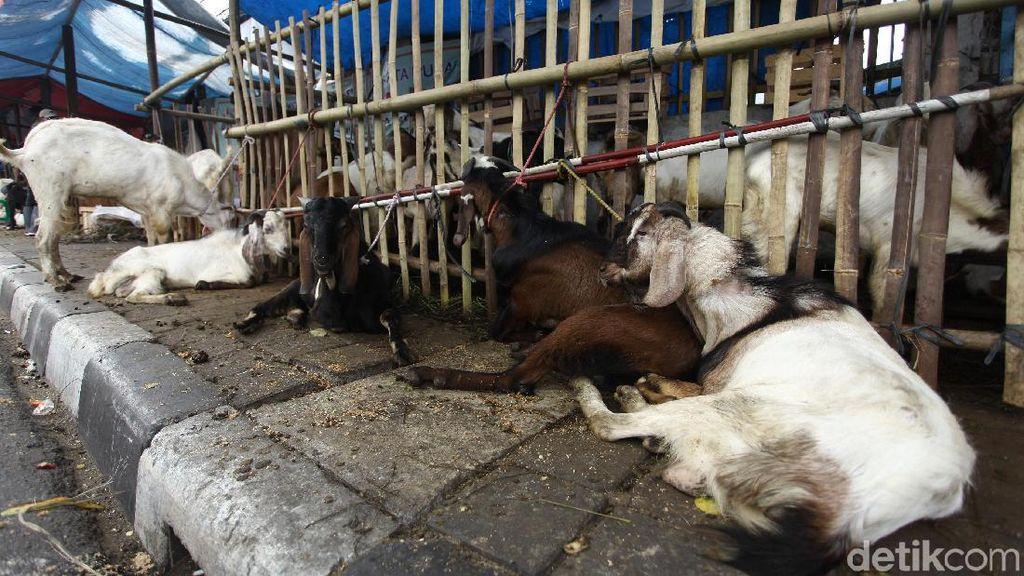 Penjual Hewan Kurban di Bandung Dianjurkan Transaksi Via Daring