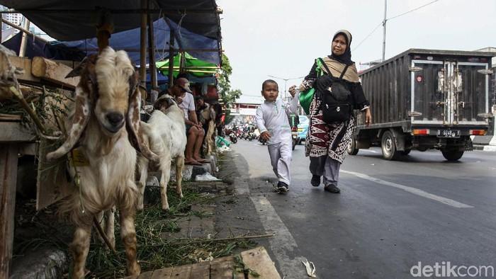 Seorang anak menangisi ayahnya yang hendak memotong hewan kurban, khawatir tertukar dengan sapi (Foto: Rifkianto Nugroho)